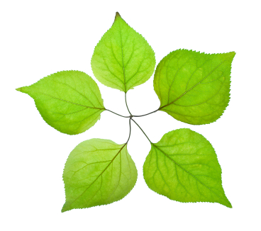 Five green leaves